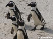 ペンギンはとても愛らしい!