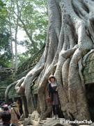 回廊にガジュマルの根が張り付いた神秘の遺跡「タ・プローム」