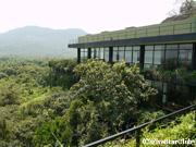 ホテル カンダラマ 緑が生い茂るホテル(ダンブラ)