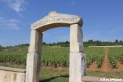 モンラッシェのブドウ畑