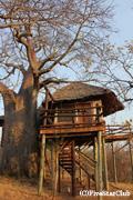 ホテル タランギレツリートップス 木の上に部屋がある