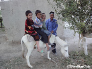 ホームステイ先にてロバに乗る子供