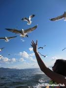 インレー湖/カモメ