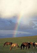 雨のあとに虹が出た