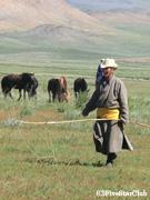 遊牧民と馬