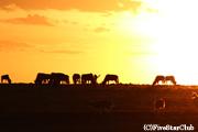 サバンナの夕陽(マサイマラ動物保護区)