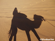 ラクダに乗る