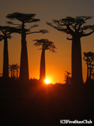 バオバブの並木道の夕陽