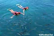 ケアンズからサンゴ礁の海まで高速ボートで約2時間
