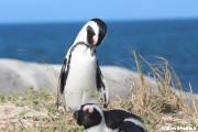 ペンギンの海岸