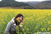 九龍瀑布へ向かう途中の菜の花畑