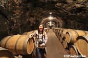 トカイワインのワイナリー
