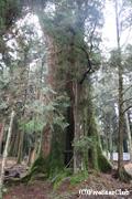 阿里山森林公園(阿里山)<イメージ>