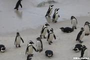 ペンギンと赤ちゃん