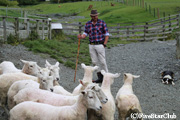 ウォルターピーク羊の牧場(クイーンズタウン)
