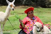 アルパカと原住民の女性
