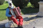 こんにちは、お馬さん~アコーディオン演奏中/マリアテレジア広場