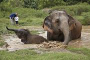 象使い体験