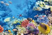 ハルガダの海