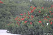 トリニダード・トバコでは様々な鳥に出会えます